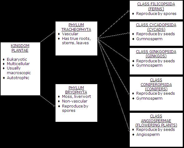 Gymnosperms and angiosperms venn diagram