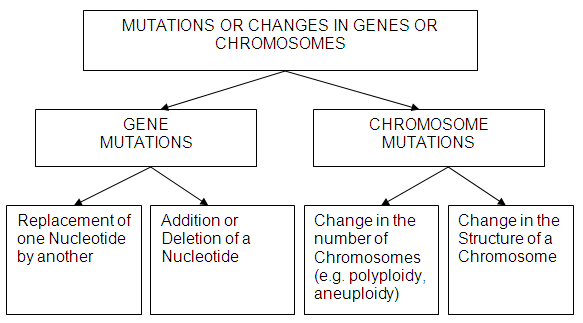 Collection of Types Of Mutations Worksheet Sharebrowse – Genetic Mutations Worksheet